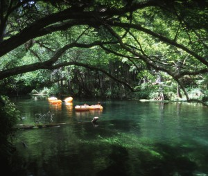 Figure 1.             Ichetucknee River-Florida's springs provide fresh water for people and wildlife as well as recreation. Credit: UF/IFAS photo (00091S) by Audrey Wynne.