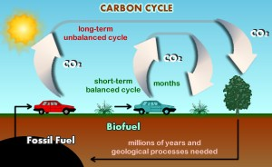 Figure 1. The Carbon Cycle: Biofuels vs. Fossil Fuel. Illustration courtesy of the Sustainable Futures Institute, Michigan Technological University