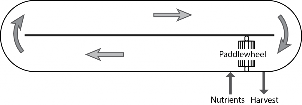 Figure 3 A schematic drawing of one segment of a raceway pond. Image: PREC